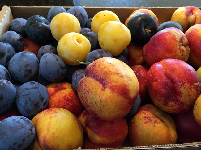 2015_8_15fruits