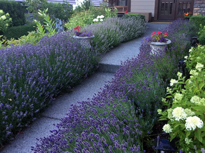 lavender entrance
