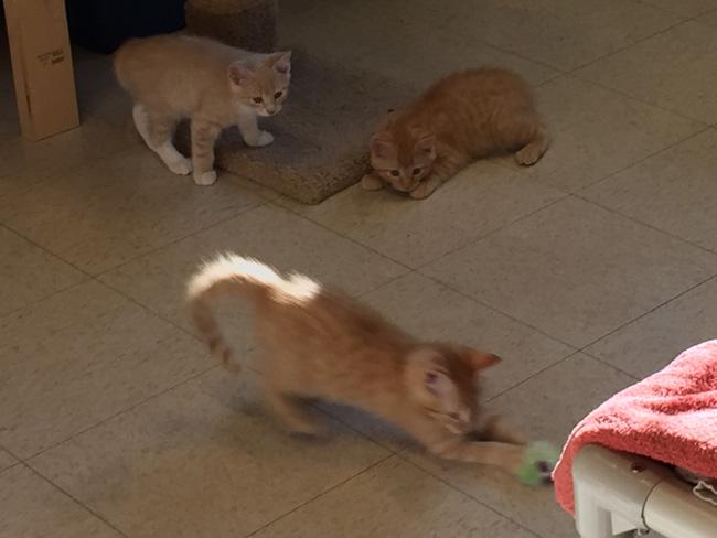 cat nursery