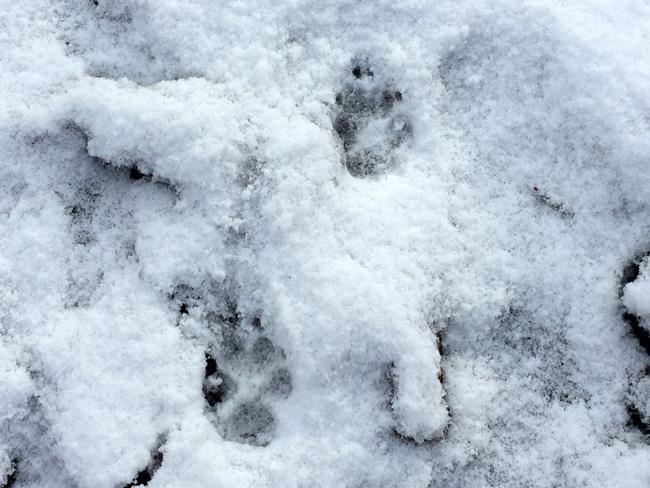 Hime's foot prints
