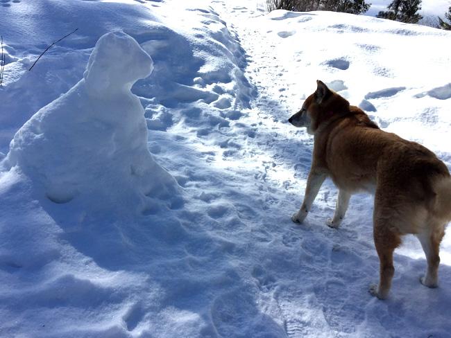 snow shiba